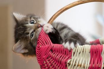 kitten-2973049_1920