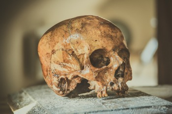 skull-2726131_1920