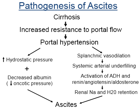 pathogenesis_of_ascites-149C3B65EC606302226